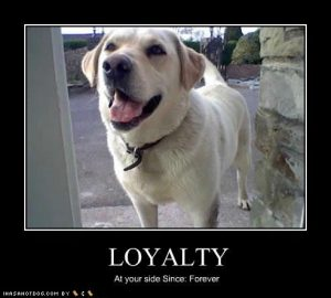 1417503963-funny-dog-pictures-loyalty-forever-jpg